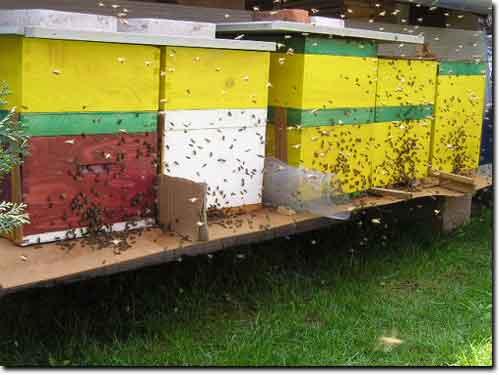 Pčelari: Šteta od suše devet miliona evra