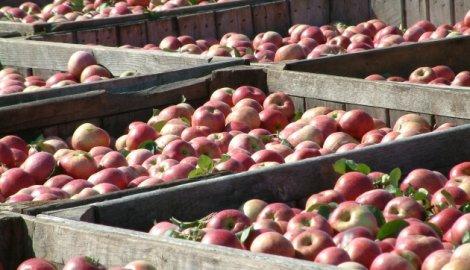 Ljajić u Rusiji o spornim jabukama