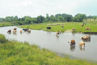 Kvalitetom mleka i mlečnih proizvoda osvojiti tržište
