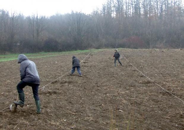 U Timočkoj Krajini 150 plantaža sa tartufima