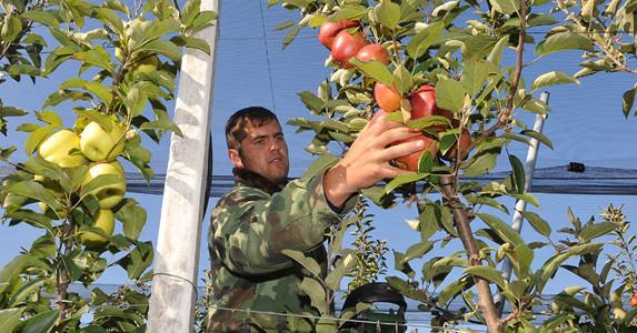 Smanjen izvoz voća iz Srbije