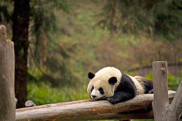 Sedam životinjskih vrsta koje bi mogle da nestanu