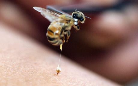 Pčelinji otrov za 700.000 dolara