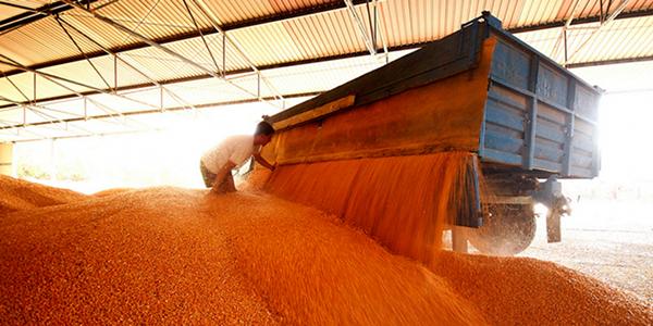 Ratari još čekaju bolju otkupnu cenu pšenice
