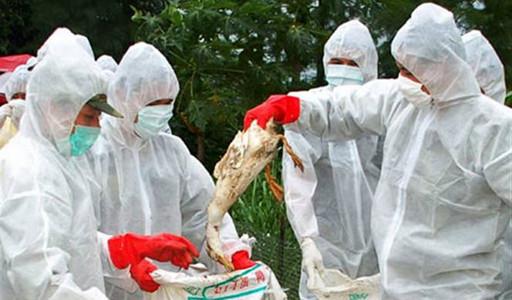 Ptice selice donele virus u Kinu