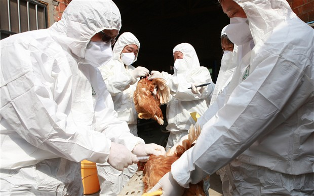 U Nemačkoj registrovan ptičji grip
