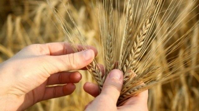 Bitka za seme
