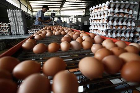Svetska proizvodnja jaja povećana za četvrtinu