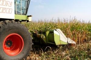 Šumadijski ratari nezadovoljni cenom kukuruza