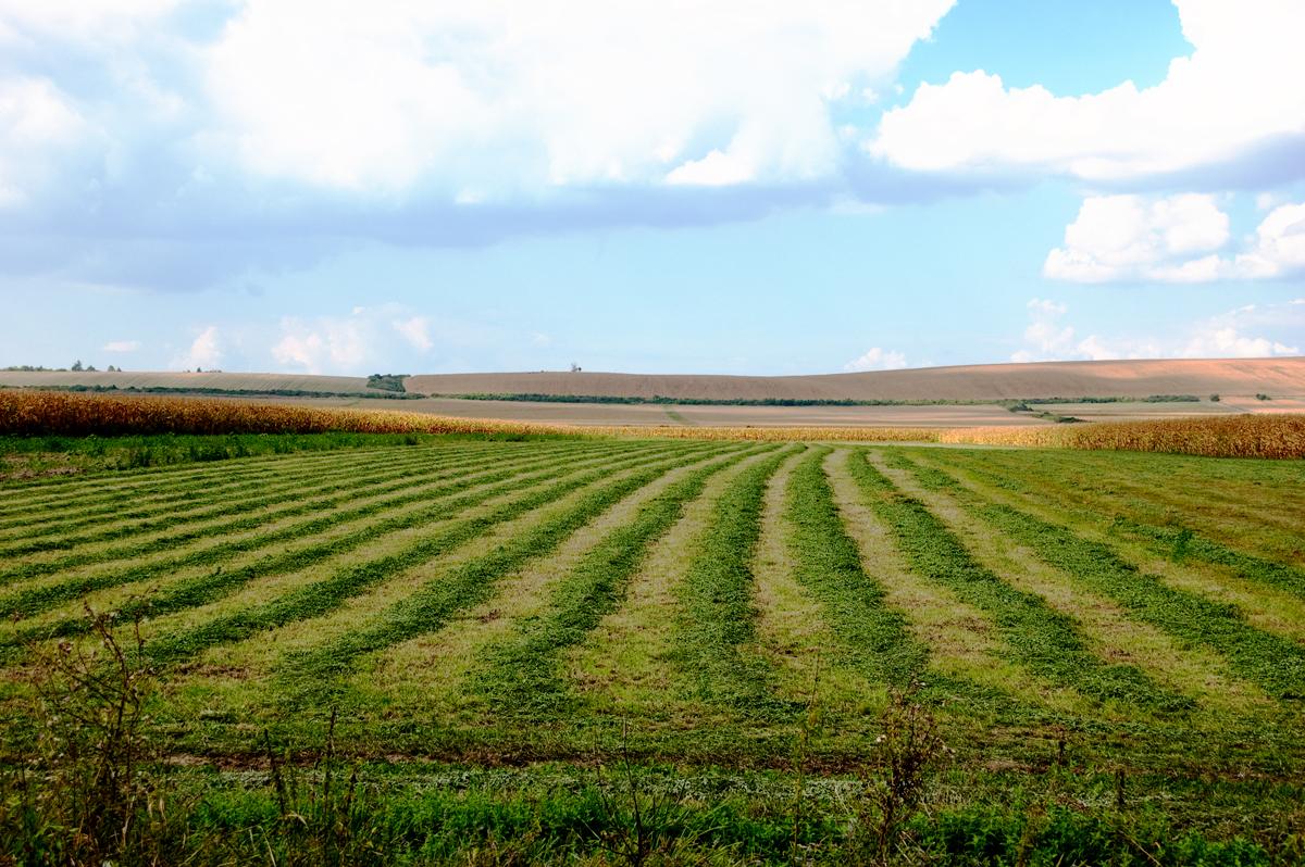 Ratarima Kikinde u arendu još 2.545 hektara
