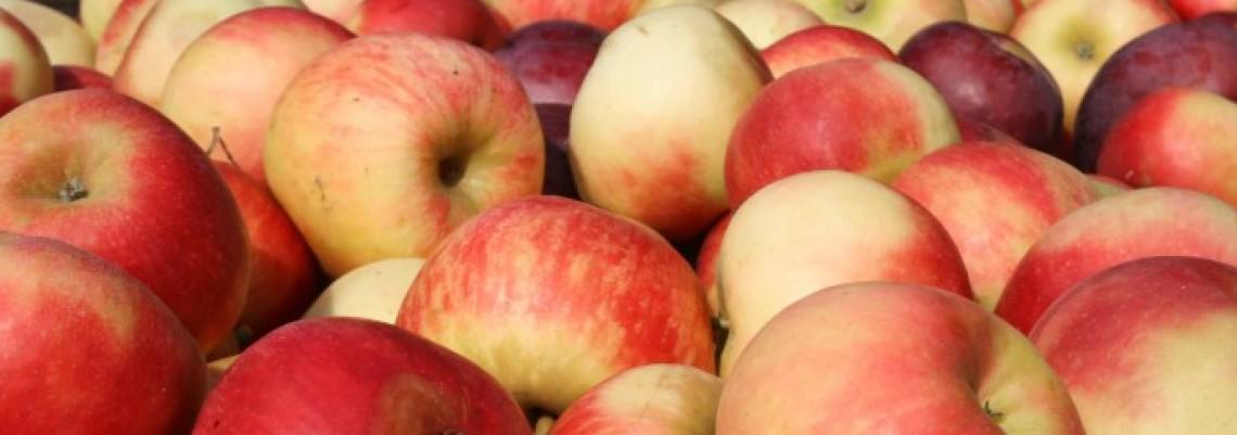 Srpsko voće na svetskoj pijaci