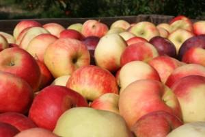 Uhapšeno 36 osoba – uvozili voće iz EU, izvozili u Rusiju