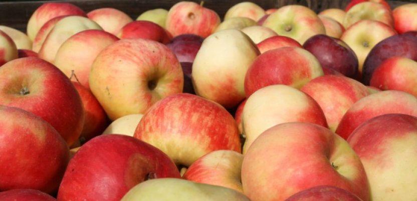 Sa Rusijom novi sporazum o izvozu voća i povrća