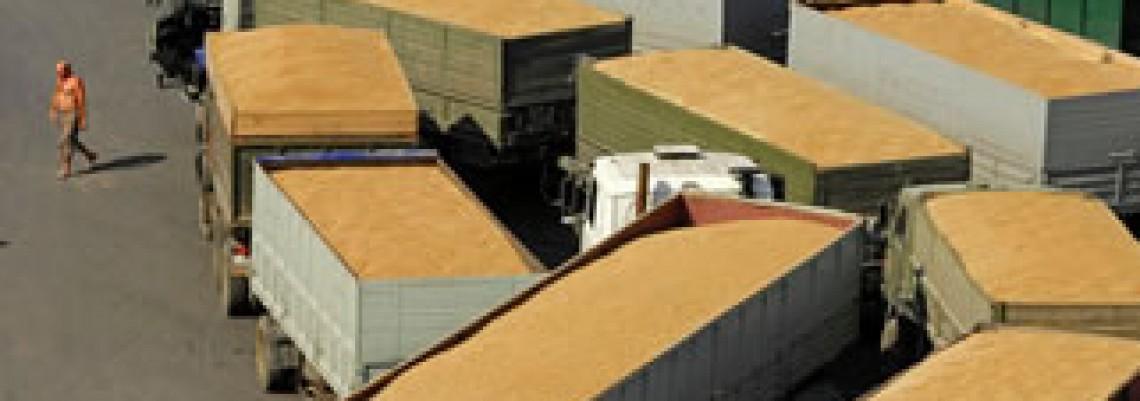 Istočna EU će dominirati izvozom žitarica