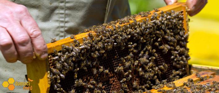 Pčelari: Najgora godina u poslednjih osamdeset