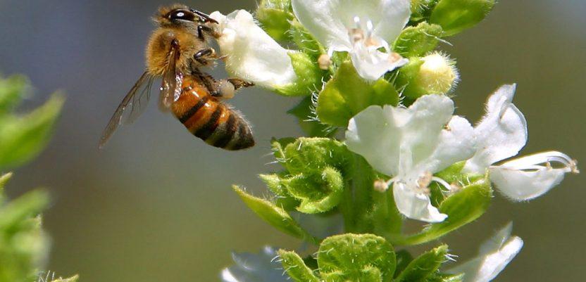 Stokholm pravi park za pčele