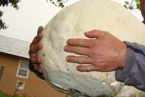 Ubrao gljivu tešku 6,5 kilograma