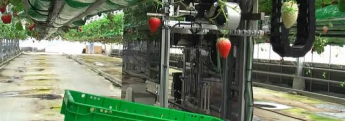 Vi spavate, robot vam bere jagode