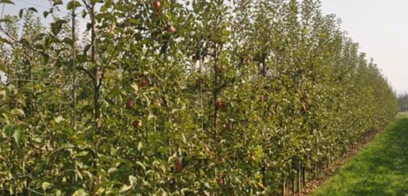 Subvencije Ministarstva poljoprivrede za višegodišnjih zasada voća, vinove loze i hmelja