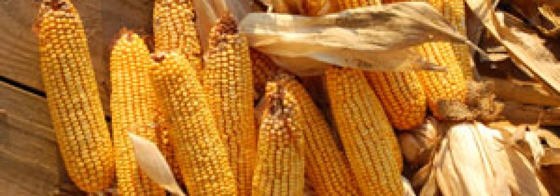Ponovo standardi EU za aflatoksin