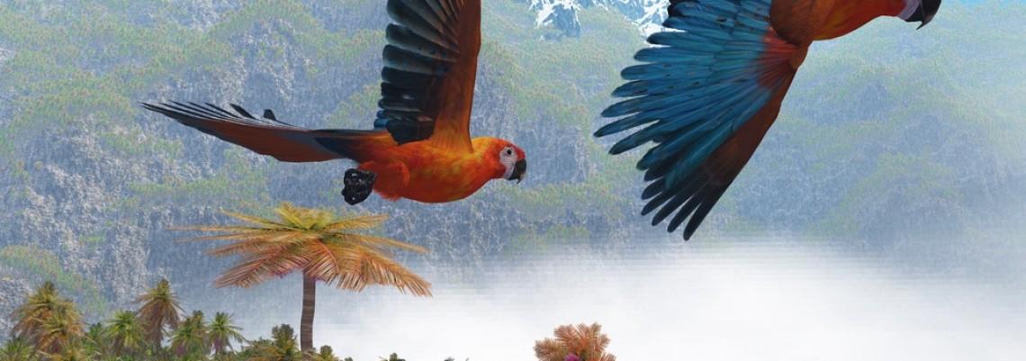 Procvetao izvoz egzotičnih ptica