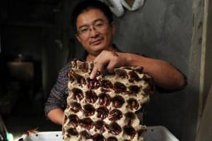 "U Kini ""cvetaju"" farme bubašvaba"
