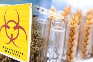GMO hrana podelila stručnjake