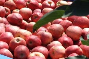 Izvoz hrane nije posao seljaka