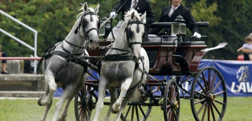 U Srbiji ostalo tek 14.000 konja, uglavnom za ukras