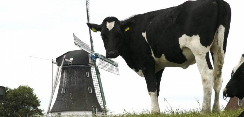 Hrvatska na začelju po proizvodnji mleka u EU