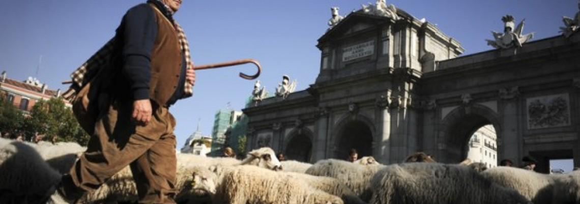 Kroz Madrid prošlo 2.000 ovaca u pratnji pastira