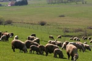 Sjenica: Vrhunska provera kvaliteta mleka