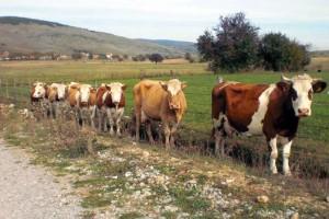 Pešter čeka garancije za izvoz u Tursku
