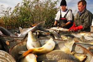 Prvi put jede se više ribe od 20 kg po stanovniku