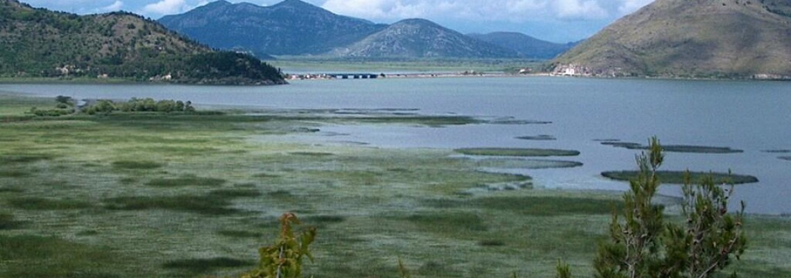 """""""Plantaže"""" truju Skadarsko jezero"""