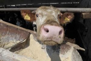 Kina još daleko za naše stočare