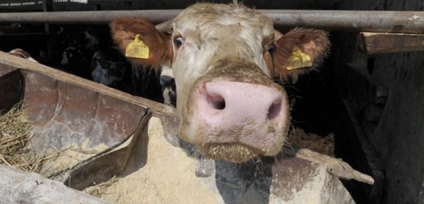 EU: 25 strategija za smanjenje antibiotika u stočarstvu