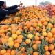 EU suspendovala uvoz voća iz Afrike