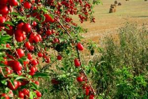 Raditi na konkurentnosti u agraru