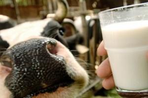 Siva zona popije 700 miliona litara mleka