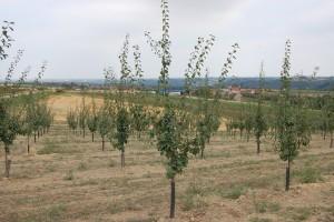 Podsticaji za podizanje zasada voćaka, vinove loze i hmelja