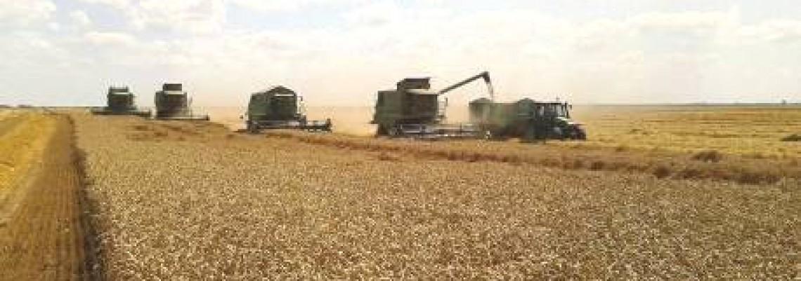 Francuska proizvodi četvrtinu cerealija u EU