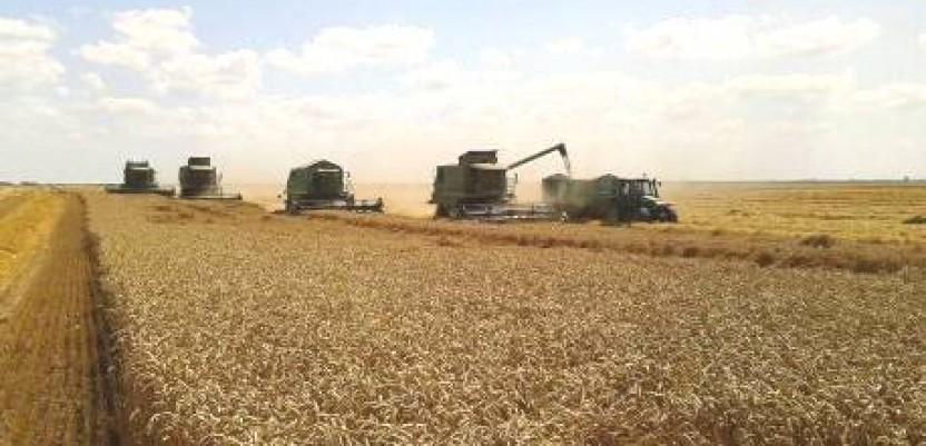 Prinos pšenice evropski, a cena niska