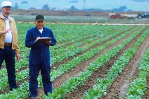 Kako da IT pomogne unapređenju poljoprivrede
