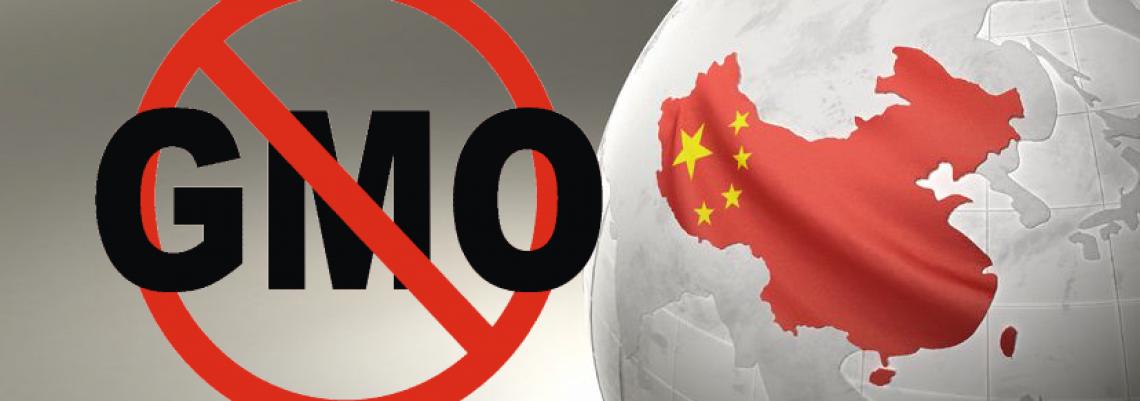 Da li će Kina dozvoliti GMO?