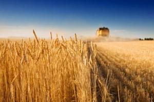 Zarada od pšenice 200 miliona dolara