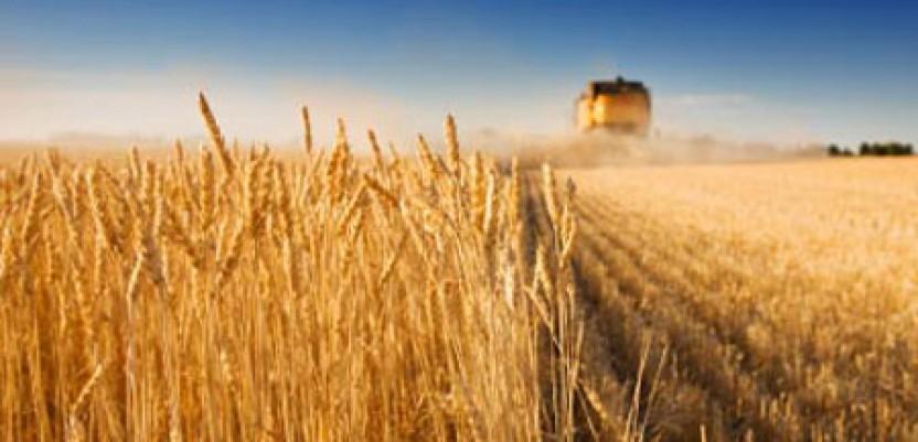 Dogovor za izvoz pšenice u Egipat ne znači i ugovoren posao