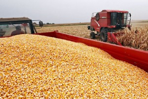 Ukrajinska kriza povećava cene žitarica u svetu