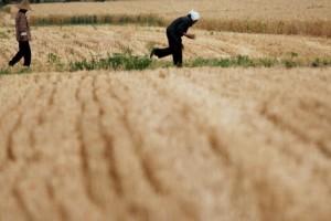 Cena rasta – Kina zatrovala njive