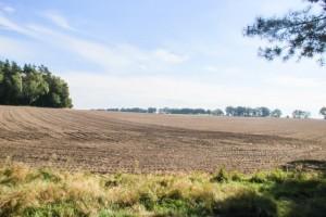 Leskovac: Srbija nema poljoprivredu za Evropu